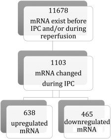 Number of distinct mRNA transcripts in extracellular vesicles before ischemic ...