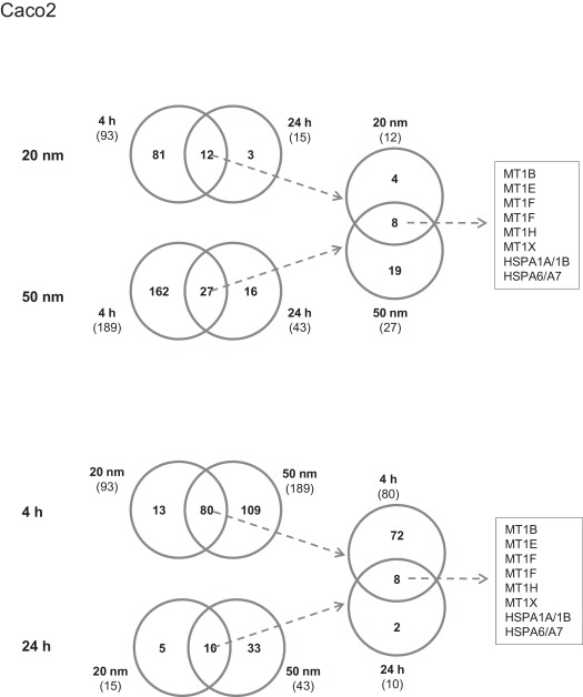 Venn diagrams showing overlap of differentially expressed genes between ...