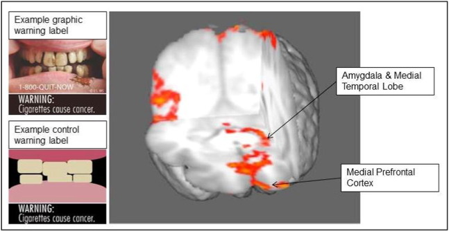 Brain regions with graphic warning label activation>control at cluster corrected ...